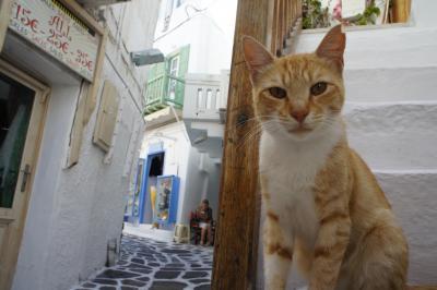 幸せな顔がいっぱいのギリシャ・( ̄∀ ̄)・③午後ミコノス島からサントリーニ島に高速艇で移動する編