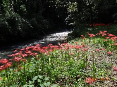 続・高仙山 虹の滝~熊野神社の二本杉