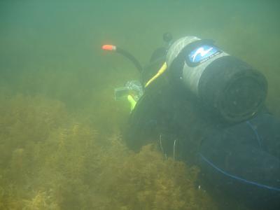 周防大島ダイビング。今回は水中カメラに挑戦しました