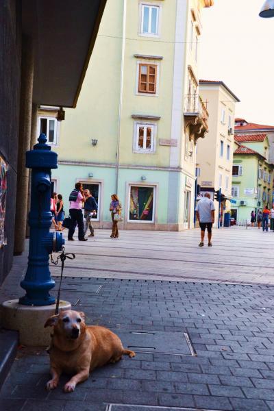 クロアチア・スロベニアとボスニア10日間2 ポストイナ、リエカ