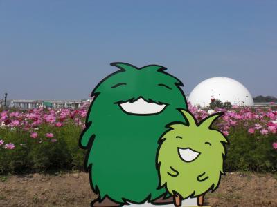 愛・地球博記念公園(モリコロパーク)コスモス綺麗でした