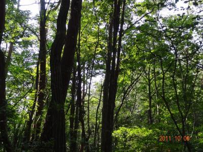 ブナ林の美しい大滝山へ