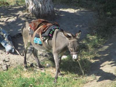 2011年秋ウズベキスタン旅行ハイライトその5:ちょっとだけ撮れた動物編