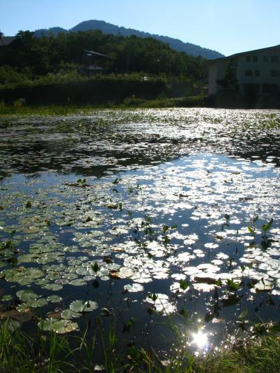 志賀高原C 蓮池・志賀高原自然保護センターで ☆長野オリンピック記念館も