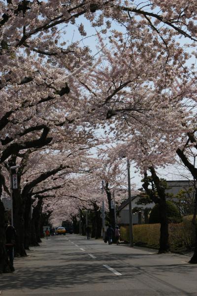 子供とお出かけHOKKAIDO(3)函館で桜を見よう