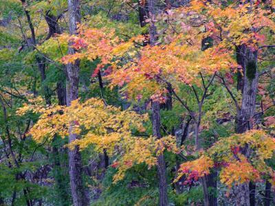 [新]奥の太道 -追いかけて紅葉:十和田湖ルート2011-