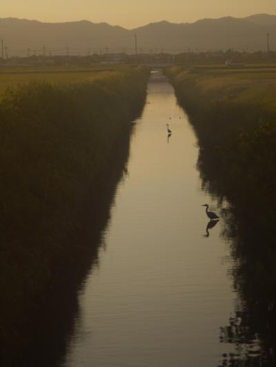 秋分の候、2011琵琶湖畔より