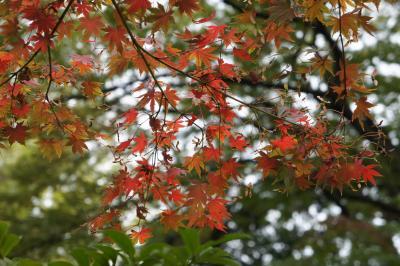 根津美術館の紅葉にはまだ早い・・・2011年文化の日、春日のついで