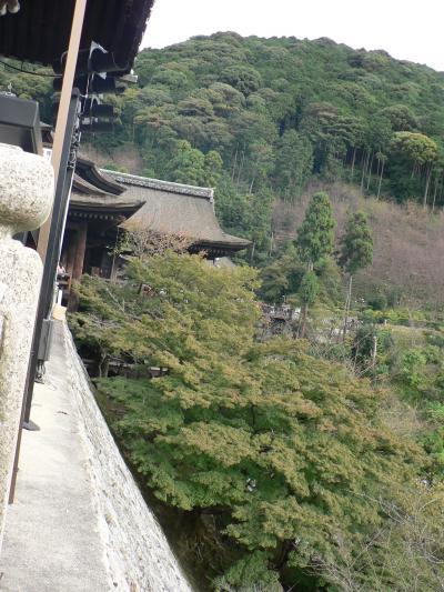 11月の清水さんはまだまだ緑・・・・・・残念ながら紅葉には早い・・・三年坂は人で一杯