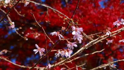 家から箱根美術館往復の道中の写真集