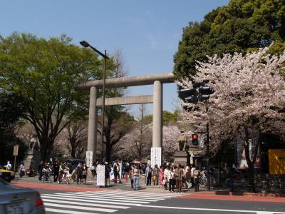 靖国神社の桜-2005年