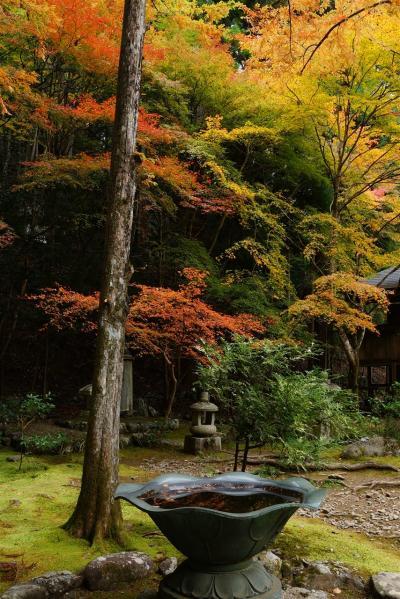 京都 2011 紅葉を見に 二日目 高山寺