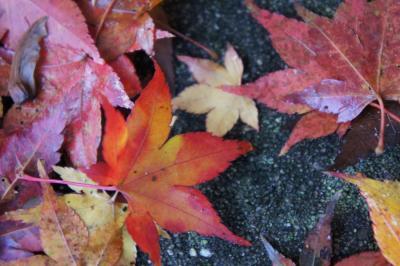 2011年!今年も紅葉の季節がやって来た!今年最初の紅葉散歩は有馬から=☆
