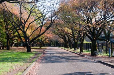 2011年 小金井公園~吉祥寺のお散歩