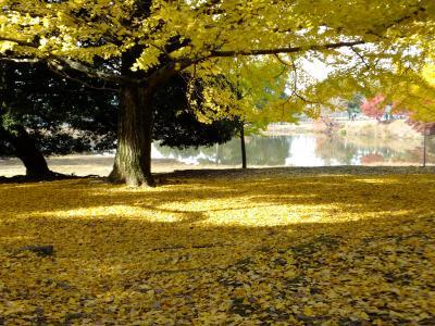 充実満喫「奈良おしゃべり館」第1回オフ会(歩き倒した奈良公園)超楽し!