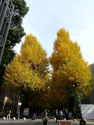 東大本郷キャンパスでヒマラヤ桜咲き始めていました