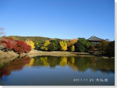 奈良公園の紅葉・黄葉