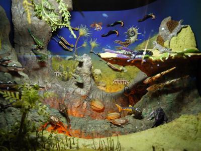 道に迷いながら海洋堂フィギュアミュージアムに行きました