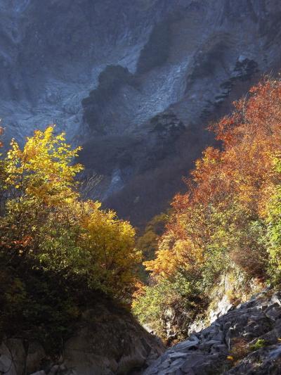 2011 11月 谷川岳の秋彩に染まる