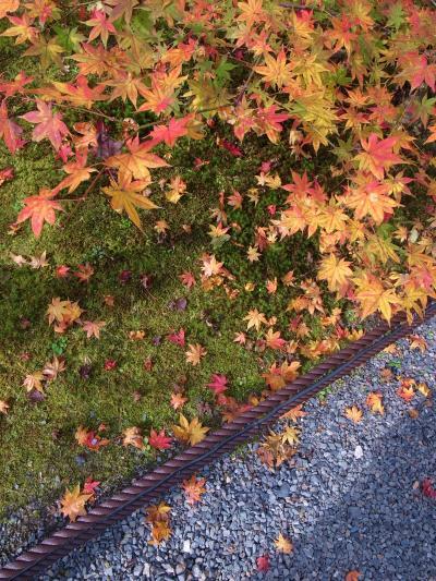 2011.11 秋晴れの京都でちょっと早い紅葉狩り♪ ②