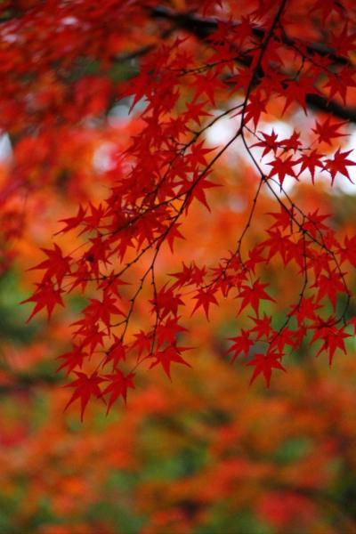 和歌山 紅葉渓庭園と白浜の柚月へ