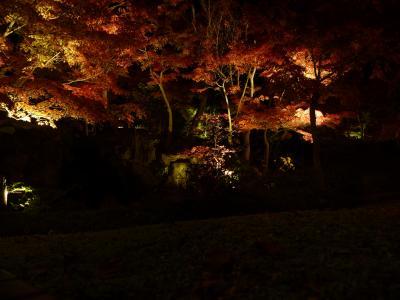 紅葉ライトアップの穴場!『けいはんな記念公園・水景園』(京都府精華町)