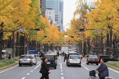金色に染まる大阪の目抜き通り 「御堂筋イチョウ並木」