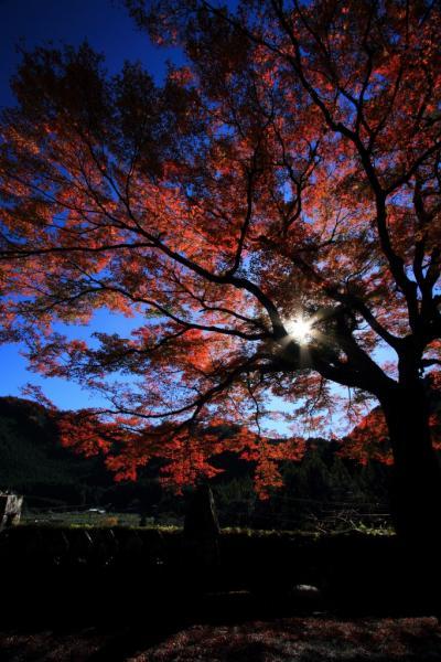 和歌山 橋杭岩の日の出と古座川の名木