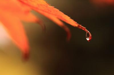 2011・12 和歌山へ紅葉を見に行こう ①