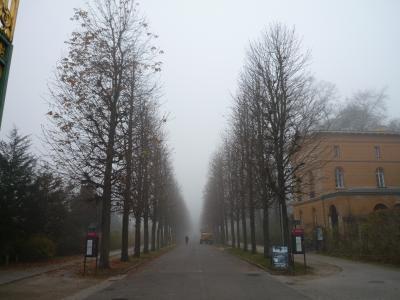 ニコライ教会合唱参加旅行 8日目 ポツダム・霧に煙るサンスーシ宮殿は幻想的でした!