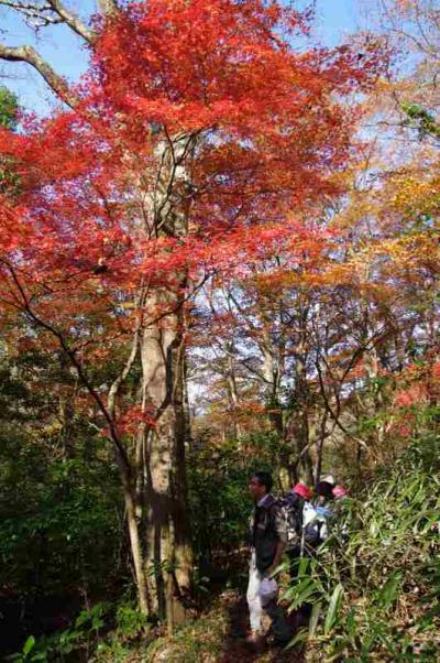 強羅温泉から千条の滝・鷹巣山を経て畑宿へ   夕食と翌日編です!!