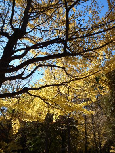 2011.12~黄金色キラキラの代々木公園をお散歩