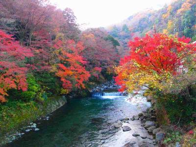 奥さん孝行  箱根・塔ノ沢温泉 山の茶屋 再訪記
