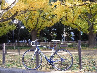 2011年12月 神宮外苑の銀杏を見に行ってきました。