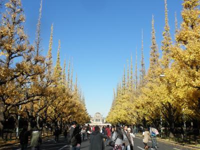 神宮外苑銀杏祭り