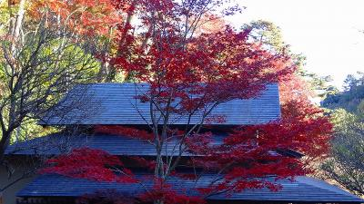 熱海梅園で紅葉を愛でる