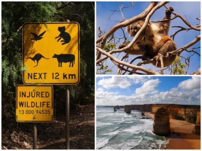 シドニー/メルボルン女子4人旅?*・゜・*初めての海外ドライブと野生のコアラウォッチング*・゜・*