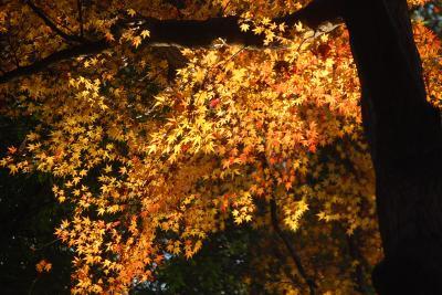 残り紅葉を求めて多福寺を訪問する