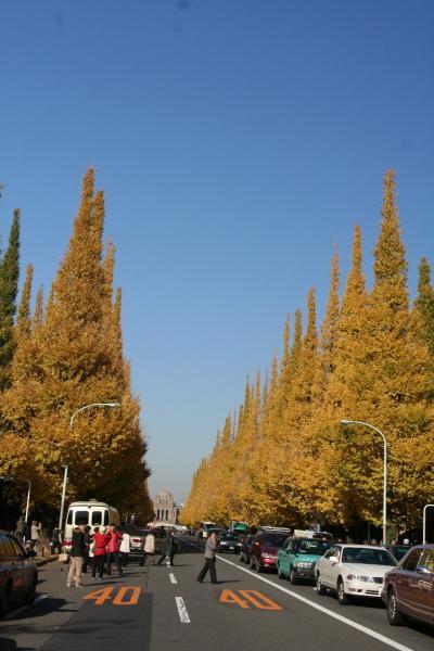 黄金色に輝く、神宮外苑の華麗なる銀杏並木