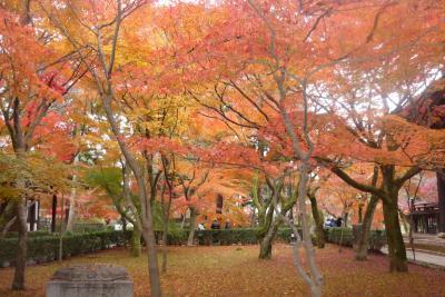 初冬の京都・奈良