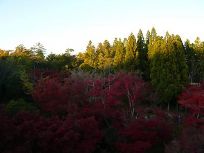 『けいはんな記念公園・水景園』の昼間の紅葉(京都府精華町)