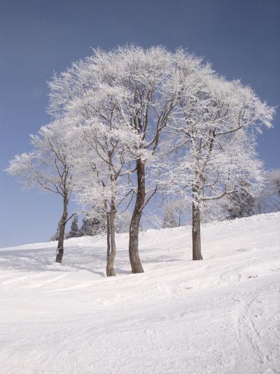 ゲレンデは雪いっぱい(^−^)ホワイトピアたかすで滑ってきました