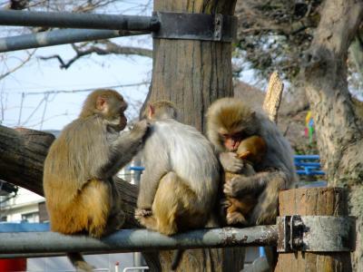 吉祥寺を散策~井の頭恩賜公園と井の頭自然文化園