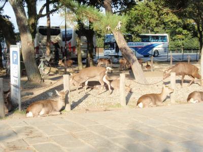 秋の旅 2010 その2 in  奈良 ~奈良公園~