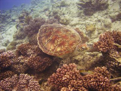 Cairns, Great Barrier Reef
