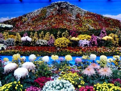 奥の細道を訪ねて第13回⑦雨に濡れそぼつ弥彦神社の菊まつり in 弥彦