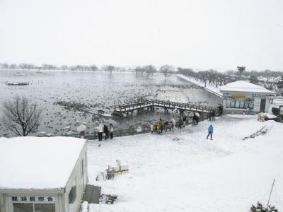 冬の新潟・五頭温泉② 瓢湖の水鳥と酒と寿司