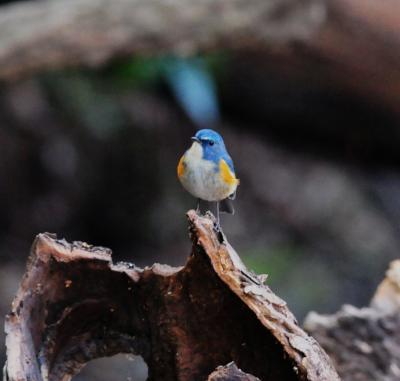 2012年2月の鳥