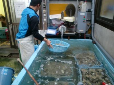 牡蠣加工場で直接牡蠣を購入する@相生・鰯浜
