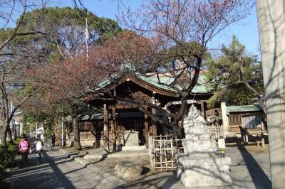 荏原神社の寒緋桜まだ咲かず 2012